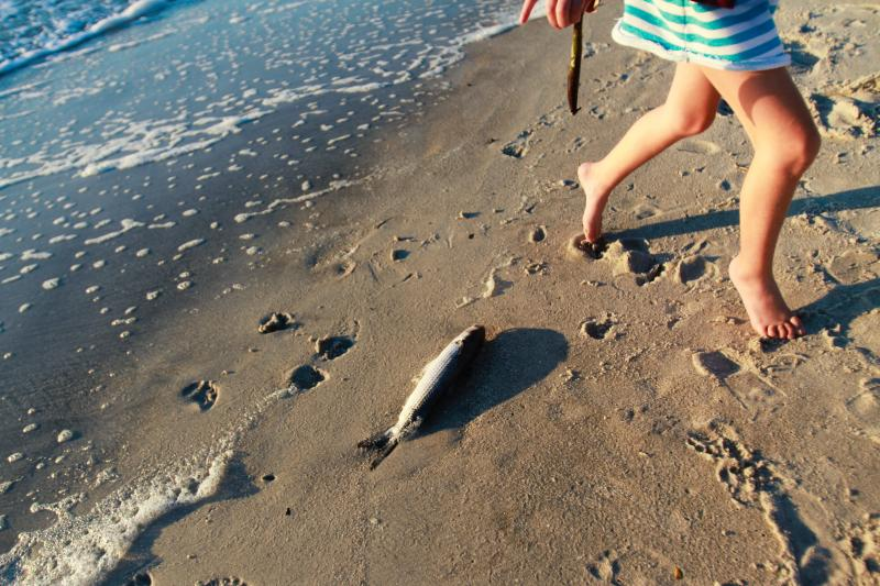 photo beach-4_zps0f7341cf.jpg